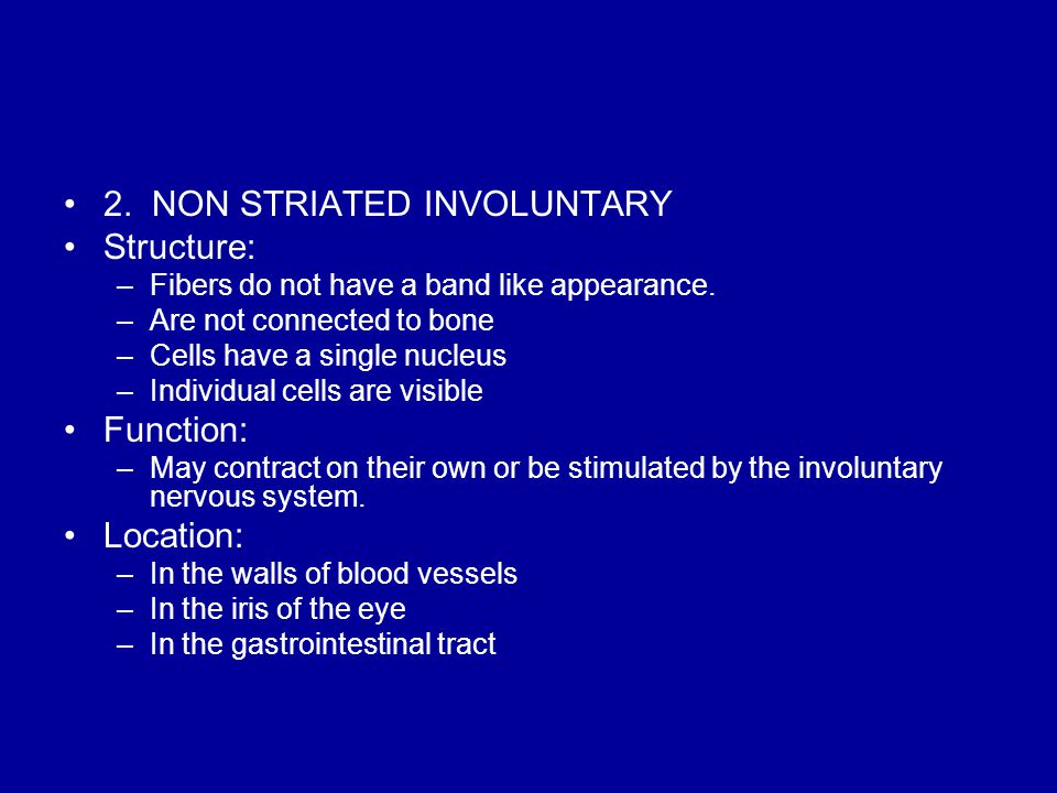 2. NON STRIATED INVOLUNTARY Structure: –Fibers do not have a band like appearance.