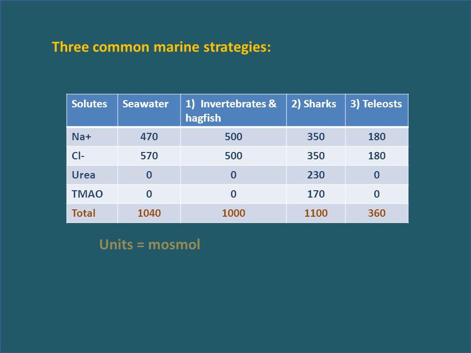 Three common marine strategies: Units = mosmol SolutesSeawater1) Invertebrates & hagfish 2) Sharks3) Teleosts Na+470500350180 Cl-570500350180 Urea002300 TMAO001700 Total104010001100360