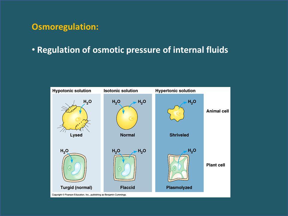 Osmoregulation: Regulation of osmotic pressure of internal fluids