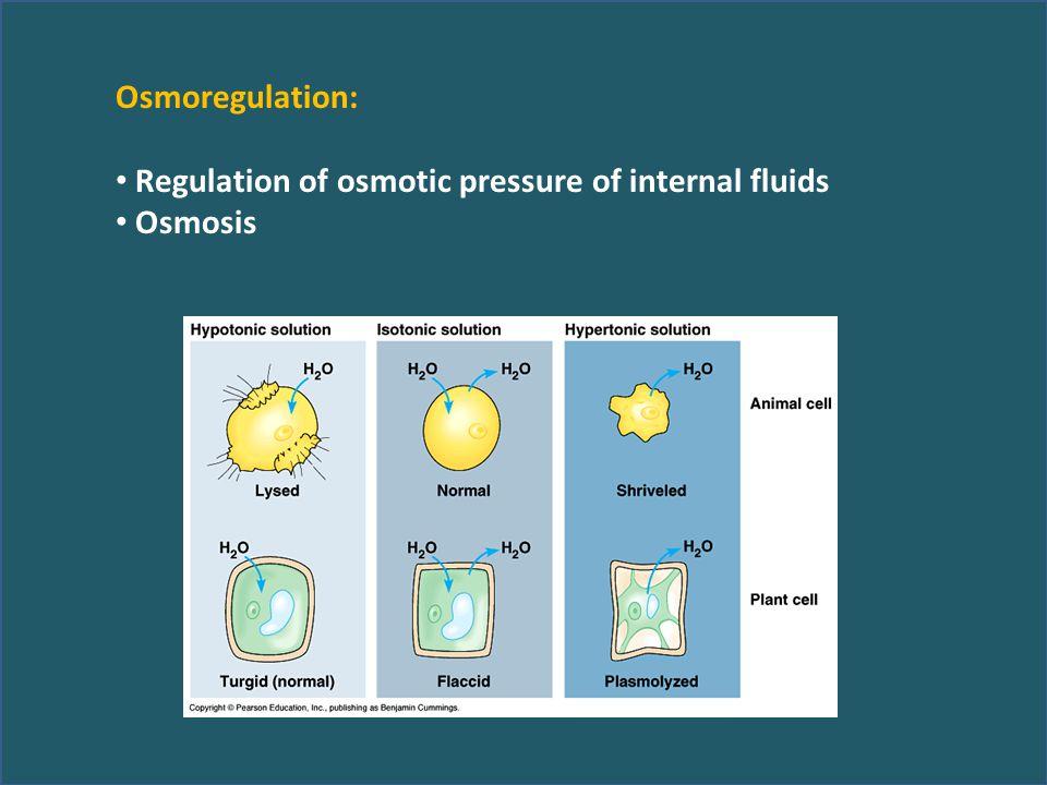 Osmoregulation: Regulation of osmotic pressure of internal fluids Osmosis