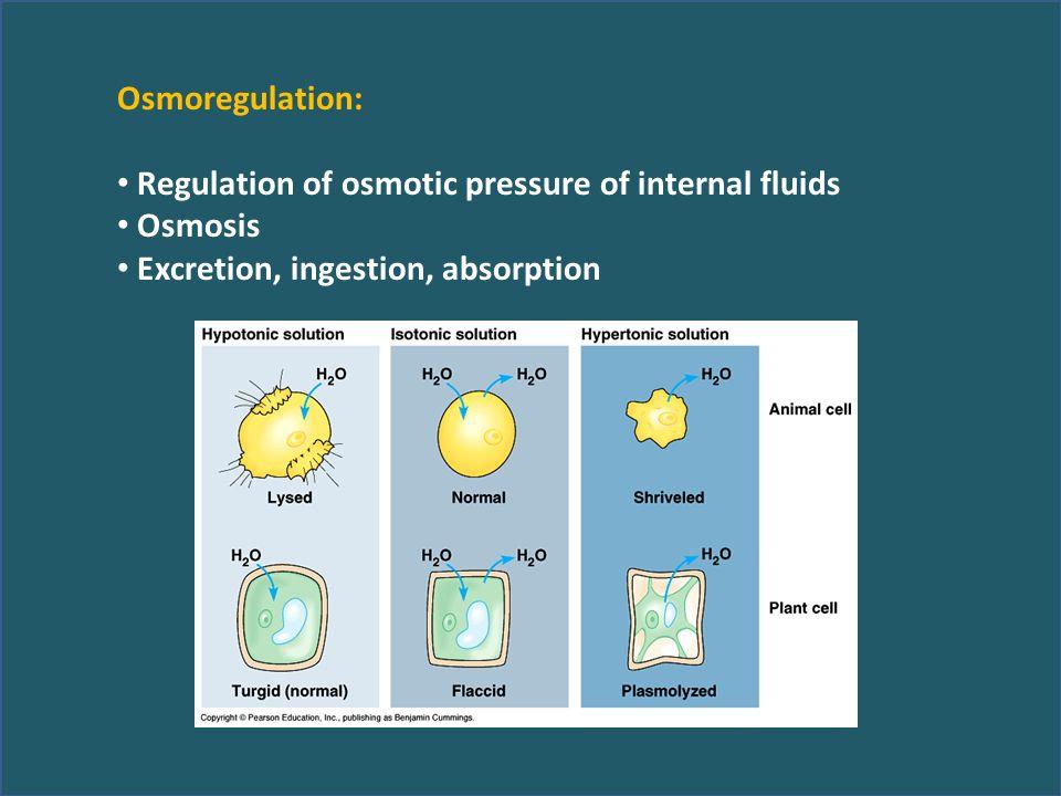 Osmoregulation: Regulation of osmotic pressure of internal fluids Osmosis Excretion, ingestion, absorption