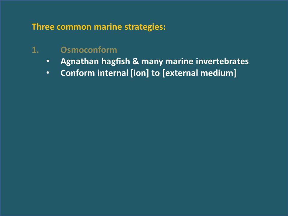 Three common marine strategies: 1.Osmoconform Agnathan hagfish & many marine invertebrates Conform internal [ion] to [external medium]