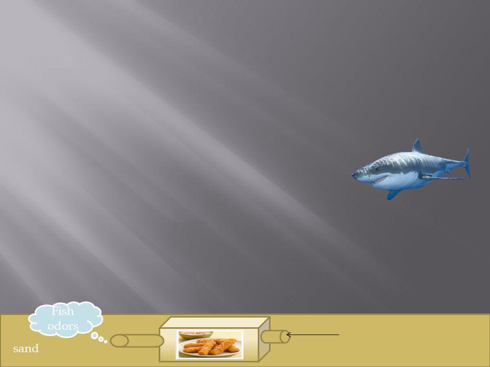 sand Fish odors