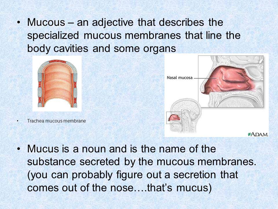 Myc/o – fungus.