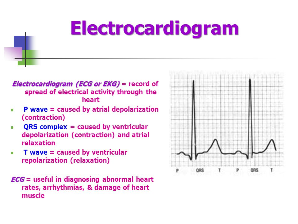 Electrocardiogram Electrocardiogram (ECG or EKG) Electrocardiogram (ECG or EKG) = record of spread of electrical activity through the heart P wave = caused by atrial depolarization (contraction) QRS complex = caused by ventricular depolarization (contraction) and atrial relaxation T wave = caused by ventricular repolarization (relaxation) ECG ECG = useful in diagnosing abnormal heart rates, arrhythmias, & damage of heart muscle