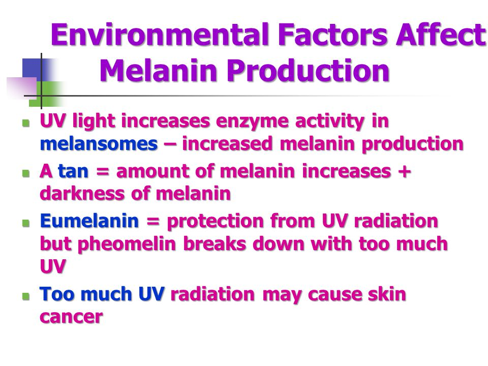 Environmental Factors Affect Melanin Production UV light increases enzyme activity in melansomes – increased melanin production UV light increases enzyme activity in melansomes – increased melanin production A tan = amount of melanin increases + darkness of melanin A tan = amount of melanin increases + darkness of melanin Eumelanin = protection from UV radiation but pheomelin breaks down with too much UV Eumelanin = protection from UV radiation but pheomelin breaks down with too much UV Too much UV radiation may cause skin cancer Too much UV radiation may cause skin cancer