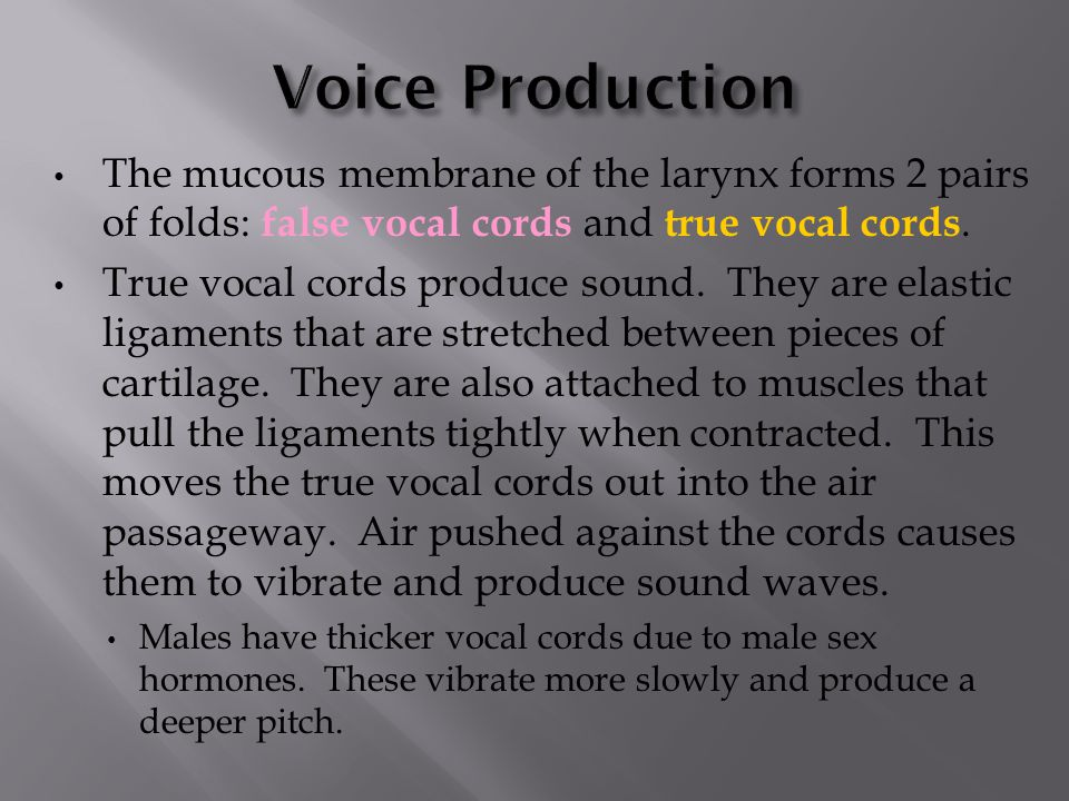 The mucous membrane of the larynx forms 2 pairs of folds: false vocal cords and true vocal cords.