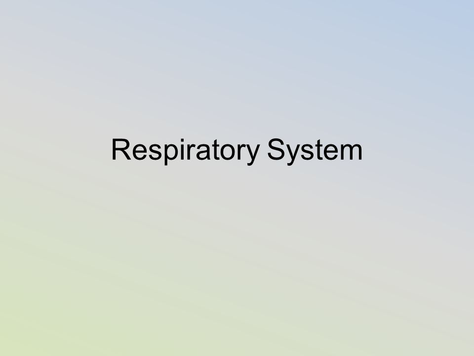 How does the Respiratory system help maintain homeostasis?
