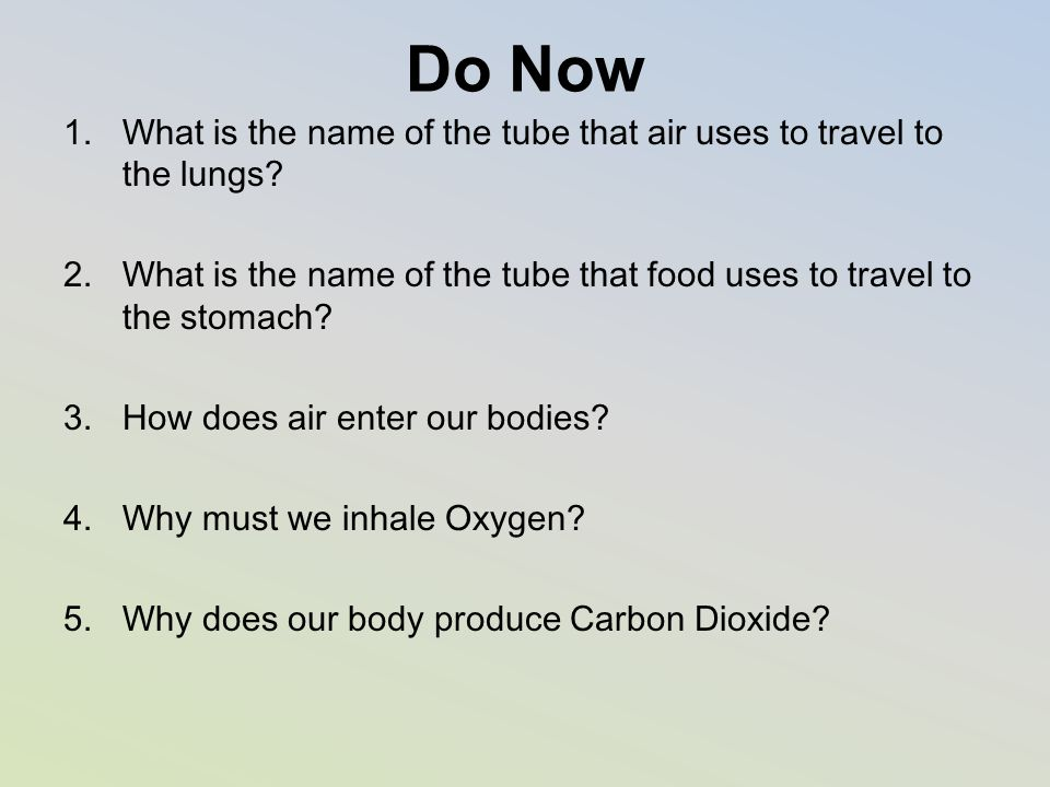 Do Now 1.What is the name of the tube that air uses to travel to the lungs? 2.What is the name of the tube that food uses to travel to the stomach? 3.