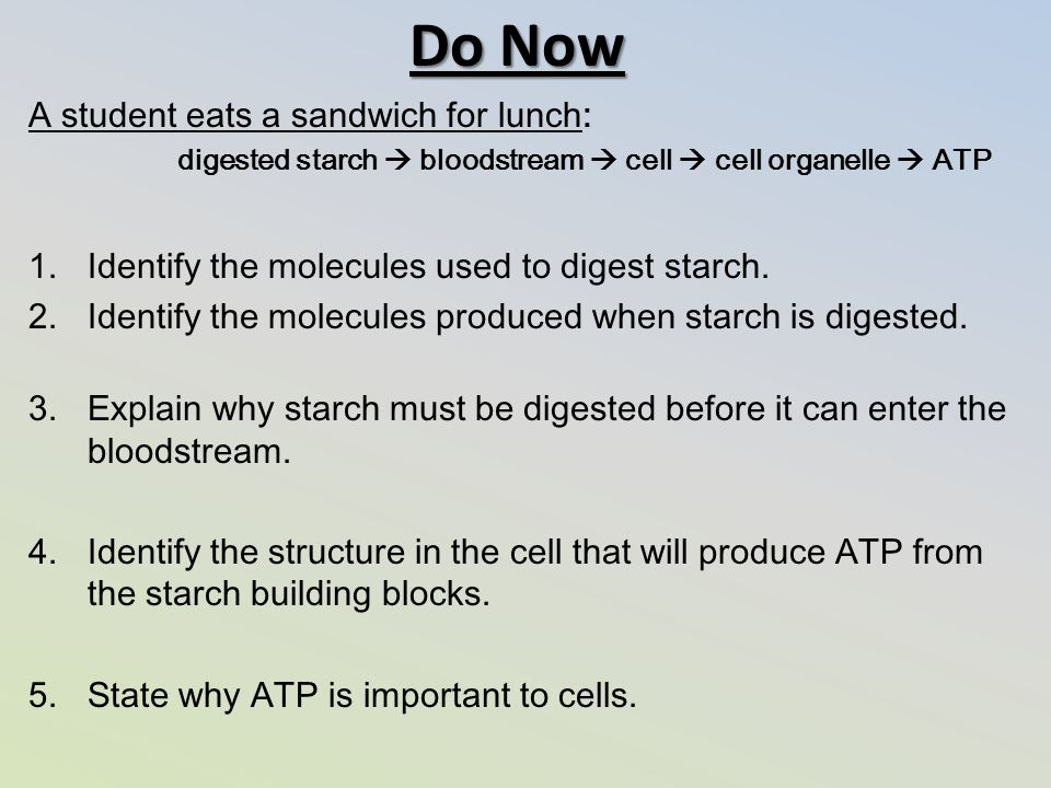 Do Now A student eats a sandwich for lunch: digested starch  bloodstream  cell  cell organelle  ATP 1.Identify the molecules used to digest starch