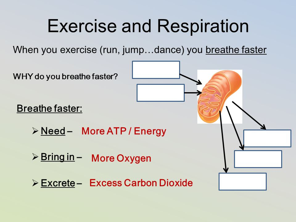 Exercise and Respiration When you exercise (run, jump…dance) you breathe faster WHY do you breathe faster? Breathe faster:  Need –  Bring in –  Exc