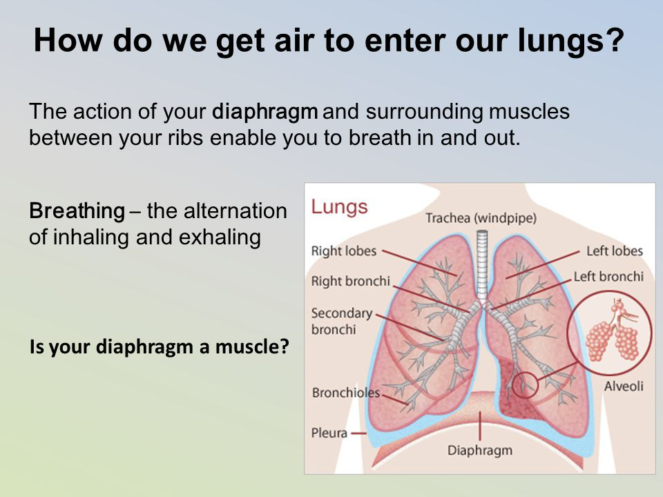 How do we get air to enter our lungs? The action of your diaphragm and surrounding muscles between your ribs enable you to breath in and out. Breathin