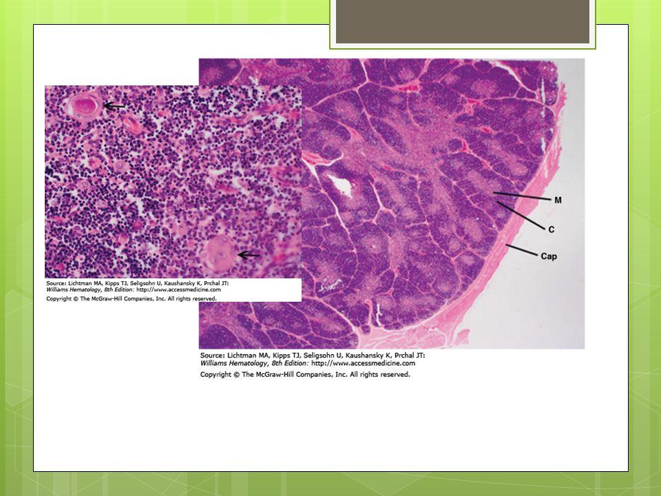 Lymph Nodes  Tissue antigens