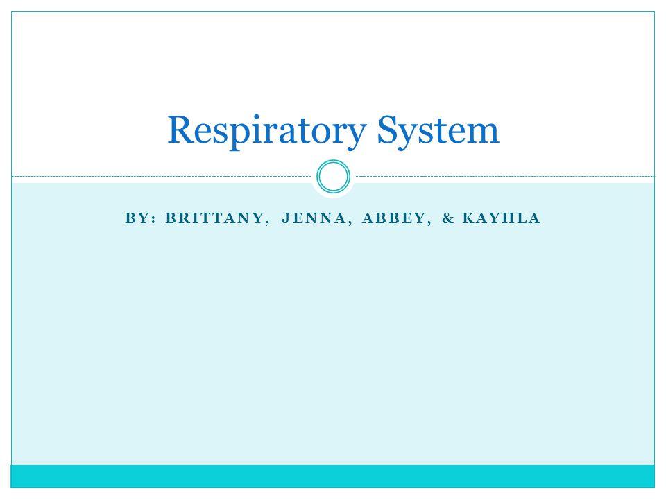 BY: BRITTANY, JENNA, ABBEY, & KAYHLA Respiratory System