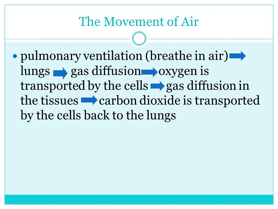 The Movement of Air pulmonary ventilation (breathe in air) lungs gas diffusion oxygen is transported by the cells gas diffusion in the tissues carbon dioxide is transported by the cells back to the lungs