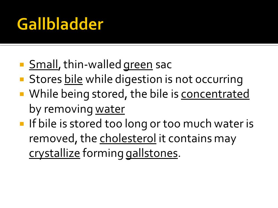  Small, thin-walled green sac  Stores bile while digestion is not occurring  While being stored, the bile is concentrated by removing water  If bi
