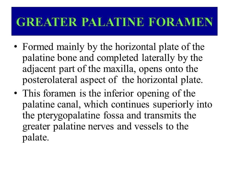 Formed mainly by the horizontal plate of the palatine bone and completed laterally by the adjacent part of the maxilla, opens onto the posterolateral