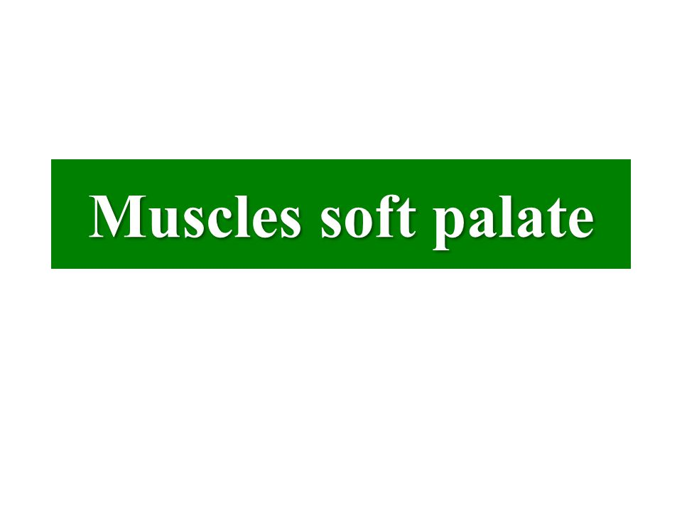 Muscles soft palate