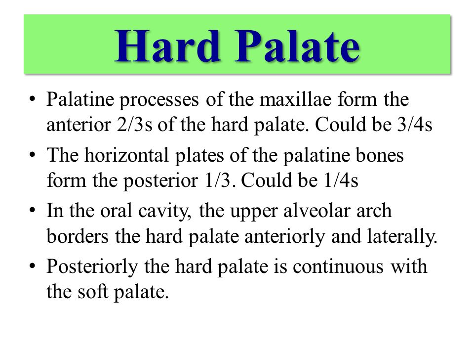 The greater palatine artery is the major artery of the hard palate The lesser palatine artery passes through the lesser palatine foramen just posterior to the greater palatine foramen contributes to the vascularization of the soft palate.