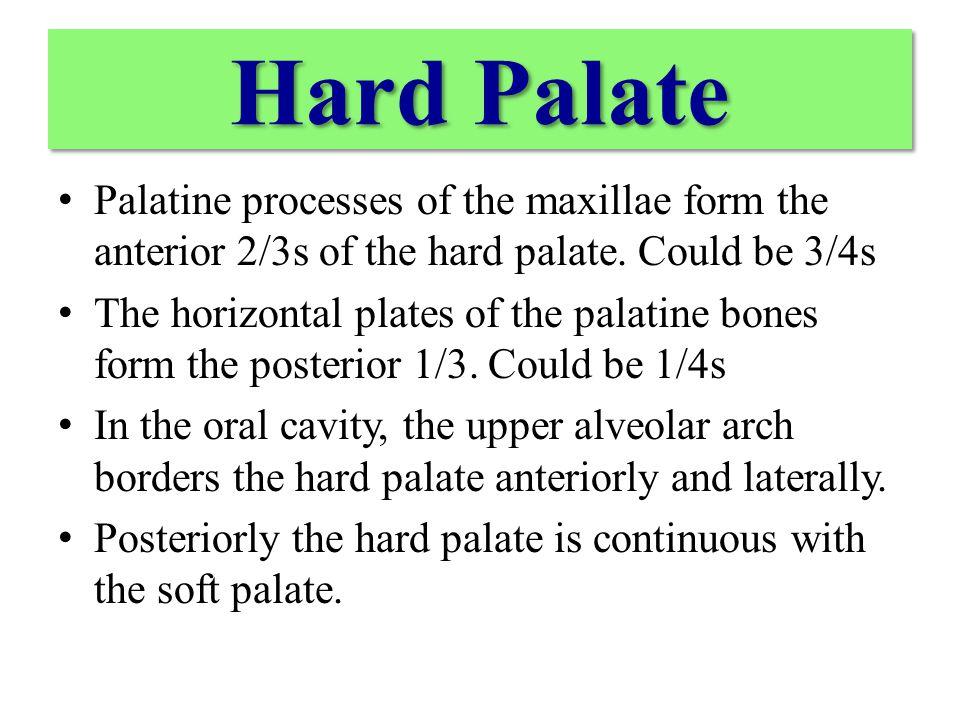 Greater palatine foramen Lesser palatine foramen incisive fossa
