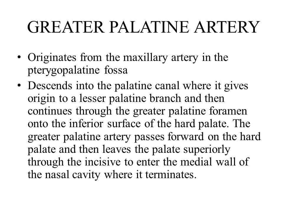 GREATER PALATINE ARTERY Originates from the maxillary artery in the pterygopalatine fossa Descends into the palatine canal where it gives origin to a