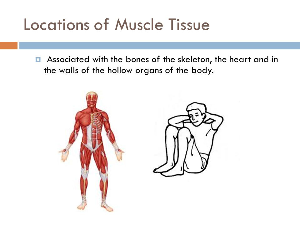 Functions  Movement  Locomotion  Maintains posture  Produces heat  Facial expressions  Pumps blood  Peristalsis