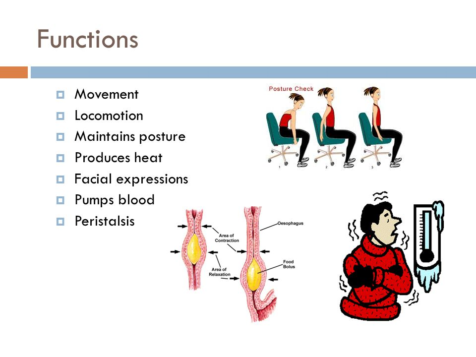 Synovial Membrane  Lines joints!