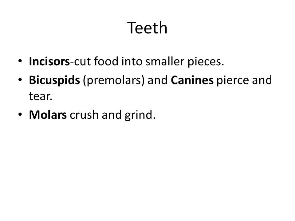 Teeth Incisors-cut food into smaller pieces.Bicuspids (premolars) and Canines pierce and tear.