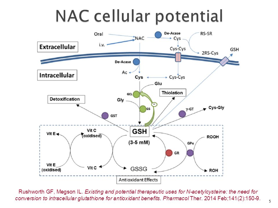 5 Rushworth GF, Megson IL. Existing and potential therapeutic uses for N-acetylcysteine: the need for conversion to intracellular glutathione for anti