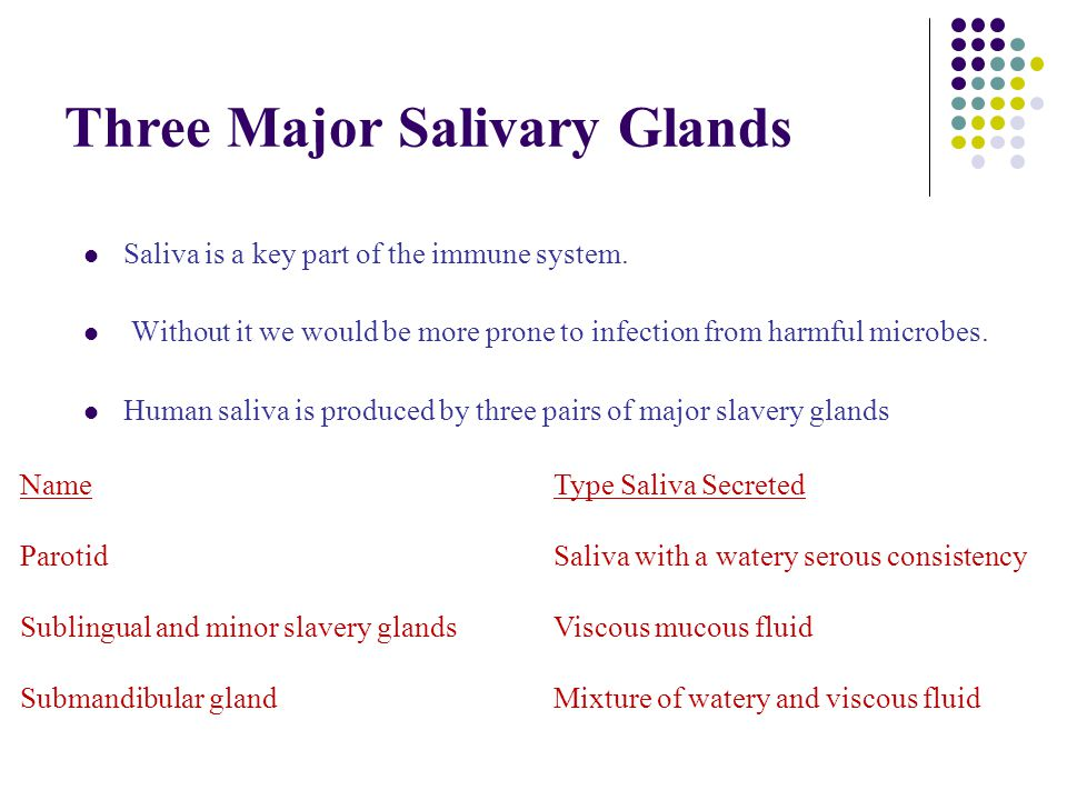 Three Major Salivary Glands Saliva is a key part of the immune system.