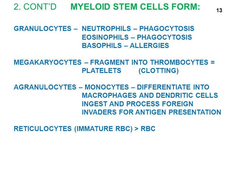 2. CONT'DMYELOID STEM CELLS FORM: GRANULOCYTES – NEUTROPHILS – PHAGOCYTOSIS EOSINOPHILS – PHAGOCYTOSIS BASOPHILS – ALLERGIES MEGAKARYOCYTES – FRAGMENT