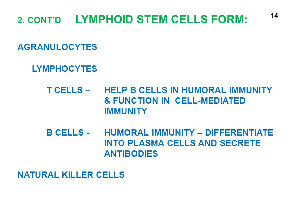 2. CONT'D LYMPHOID STEM CELLS FORM: AGRANULOCYTES LYMPHOCYTES T CELLS – HELP B CELLS IN HUMORAL IMMUNITY & FUNCTION IN CELL-MEDIATED IMMUNITY B CELLS