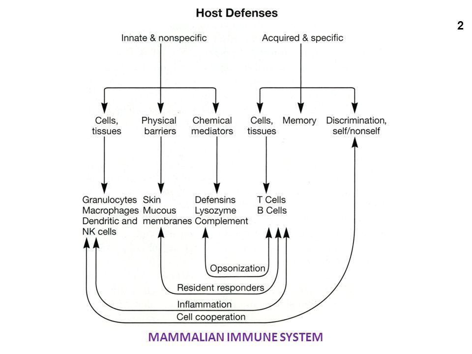 MAMMALIAN IMMUNE SYSTEM 2