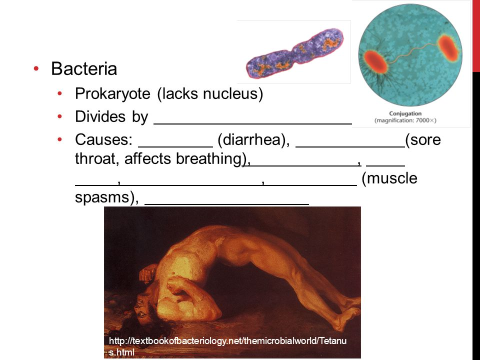 Bacteria Prokaryote (lacks nucleus) Divides by Causes: (diarrhea), (sore throat, affects breathing),,,, (muscle spasms), http://textbookofbacteriology