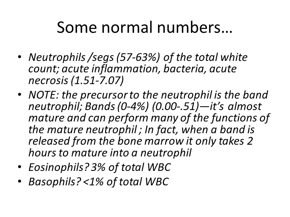 Some normal numbers… Neutrophils /segs (57-63%) of the total white count; acute inflammation, bacteria, acute necrosis (1.51-7.07) NOTE: the precursor to the neutrophil is the band neutrophil; Bands (0-4%) (0.00-.51)—it's almost mature and can perform many of the functions of the mature neutrophil ; In fact, when a band is released from the bone marrow it only takes 2 hours to mature into a neutrophil Eosinophils.