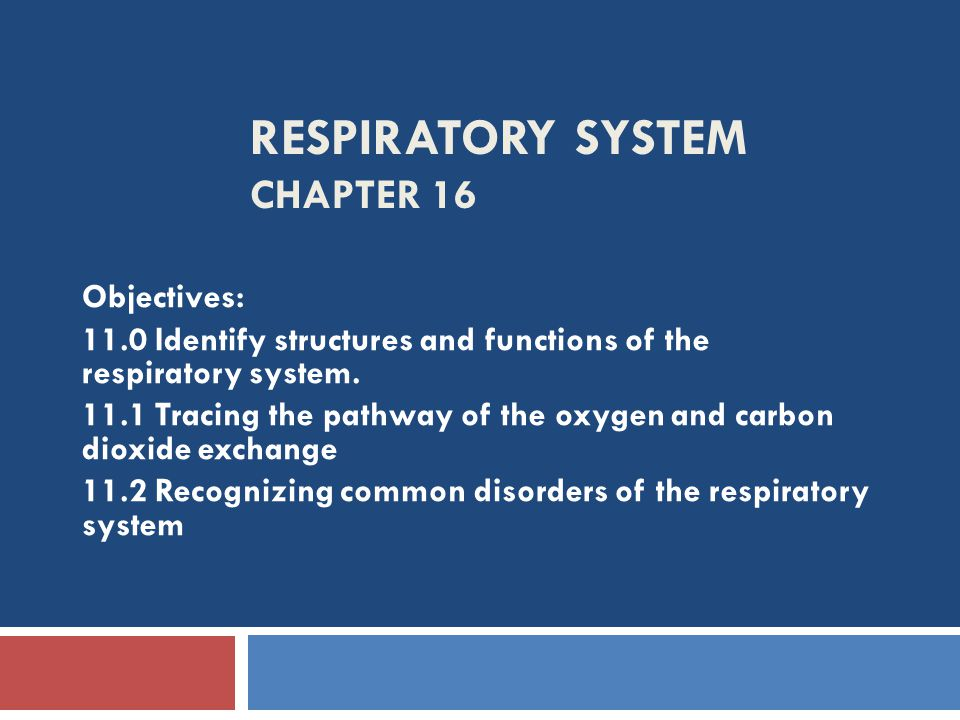 RESPIRATORY SYSTEM CHAPTER 16 Objectives: 11.0 Identify structures and functions of the respiratory system. 11.1 Tracing the pathway of the oxygen and