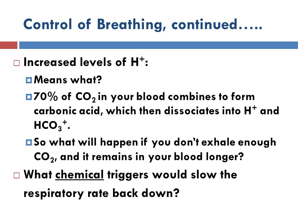 Control of Breathing, continued…..  Increased levels of H + :  Means what?  70% of CO 2 in your blood combines to form carbonic acid, which then di