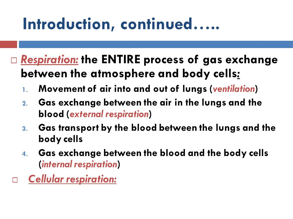 Introduction, continued…..  Respiration: the ENTIRE process of gas exchange between the atmosphere and body cells: 1. Movement of air into and out of