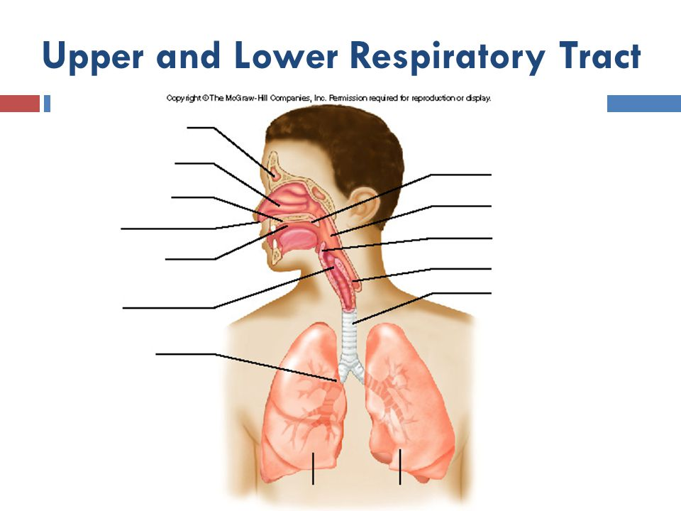 Upper and Lower Respiratory Tract