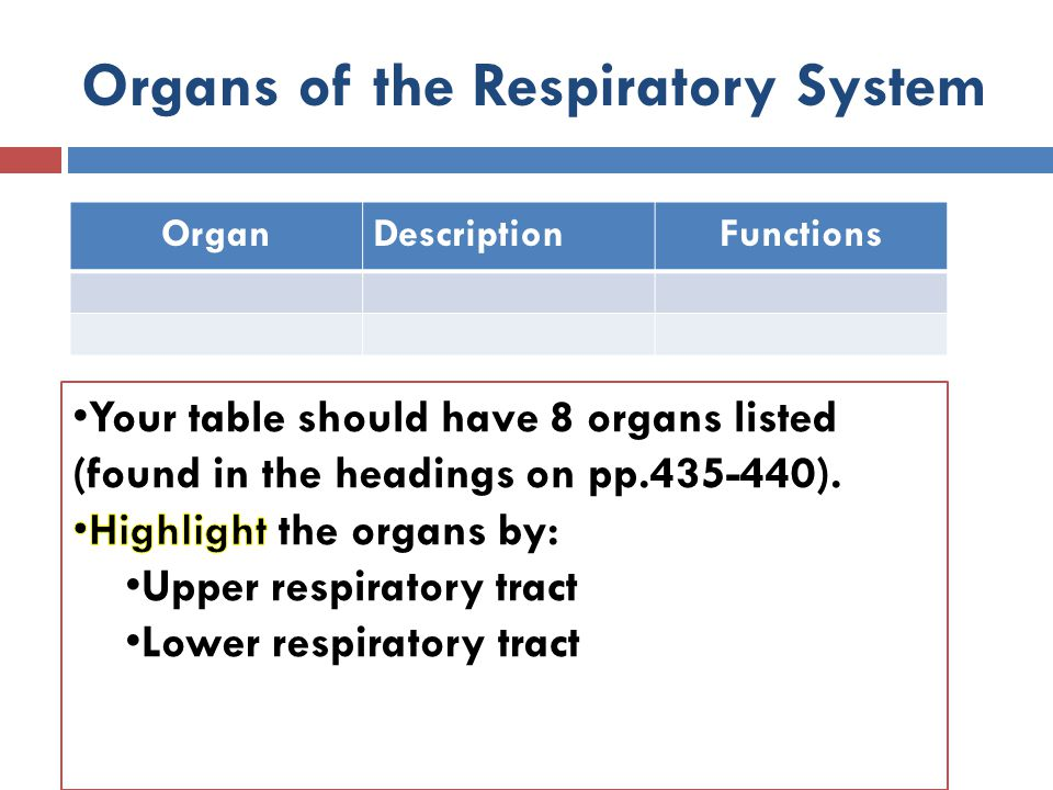 Organs of the Respiratory System OrganDescriptionFunctions