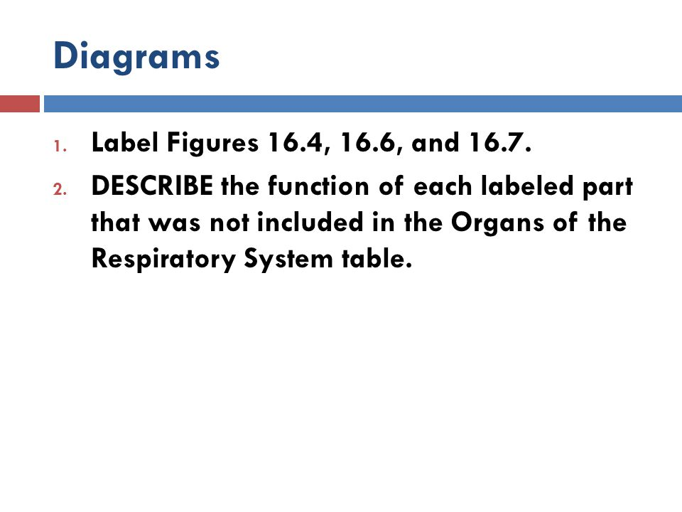 Diagrams 1. Label Figures 16.4, 16.6, and 16.7. 2. DESCRIBE the function of each labeled part that was not included in the Organs of the Respiratory S
