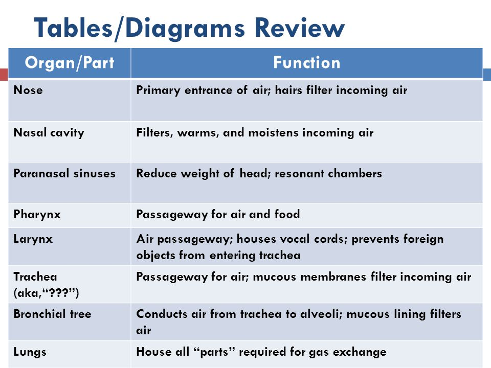 Tables/Diagrams Review Organ/PartFunction NosePrimary entrance of air; hairs filter incoming air Nasal cavityFilters, warms, and moistens incoming air
