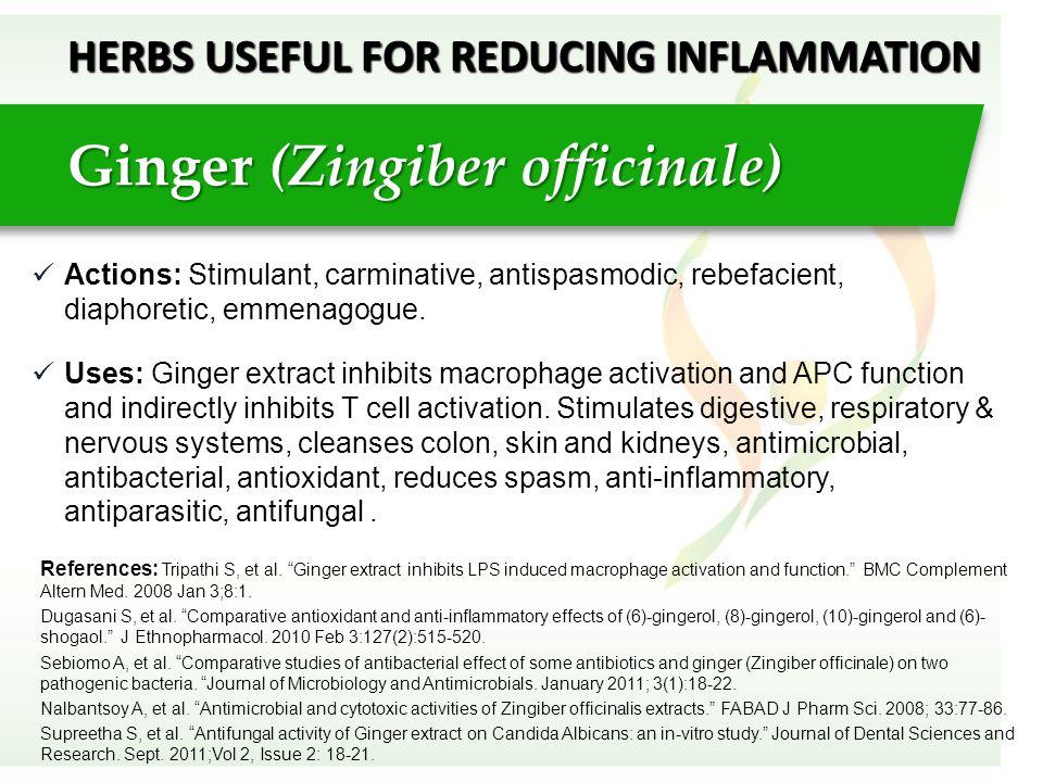 Actions: Stimulant, carminative, antispasmodic, rebefacient, diaphoretic, emmenagogue. Uses: Ginger extract inhibits macrophage activation and APC fun