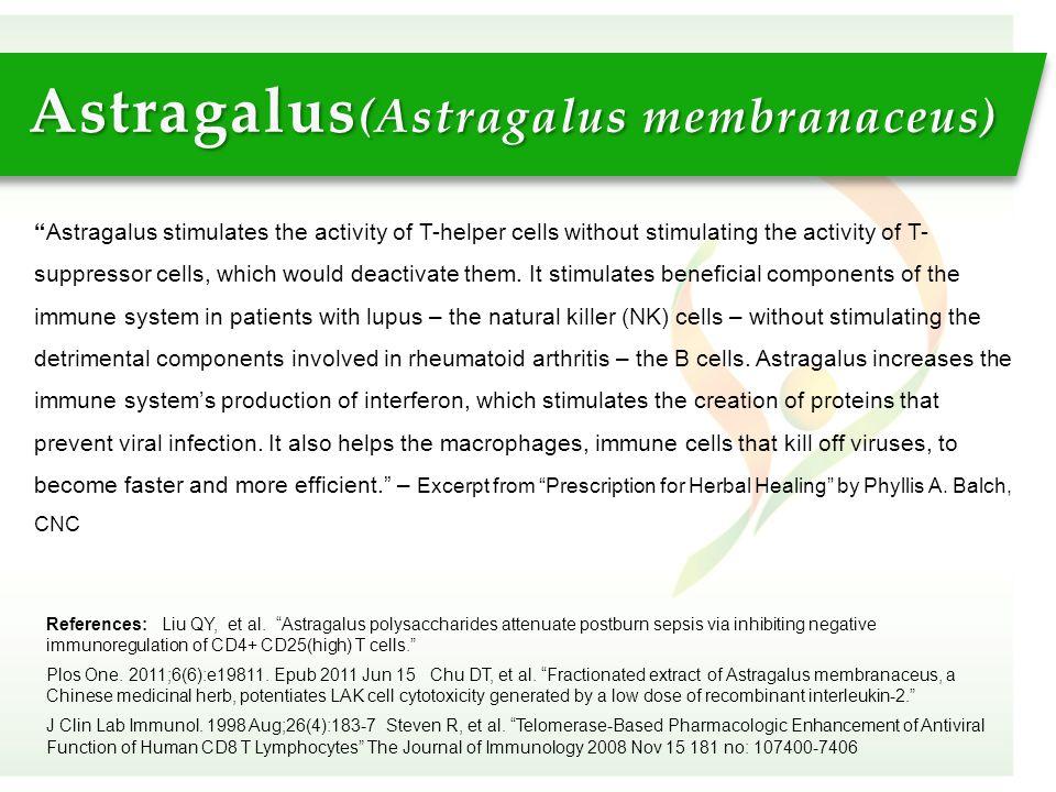 """Astragalus (Astragalus membranaceus) References: Liu QY, et al. """"Astragalus polysaccharides attenuate postburn sepsis via inhibiting negative immunore"""