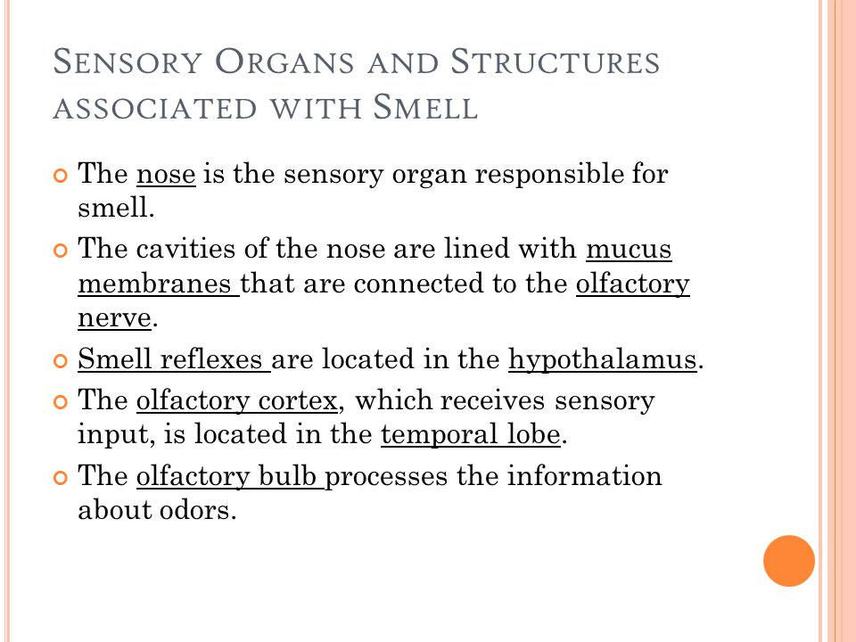 S ENSORY O RGANS AND S TRUCTURES ASSOCIATED WITH S MELL The nose is the sensory organ responsible for smell.
