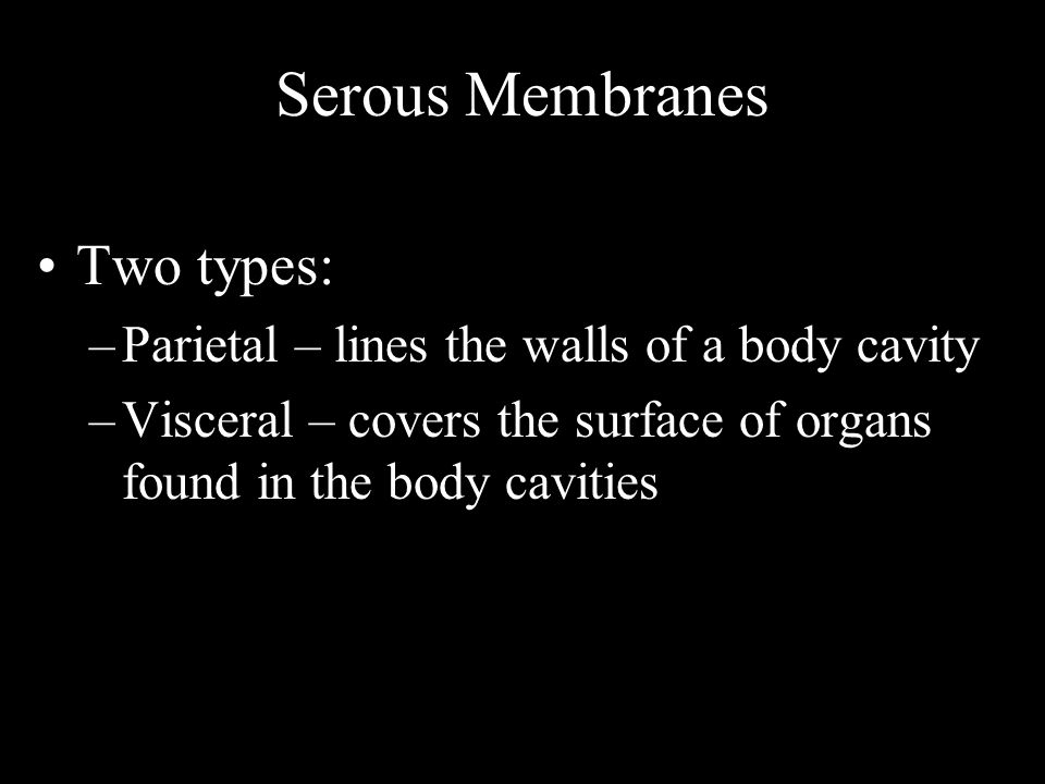 Serous Membranes Two types: –Parietal – lines the walls of a body cavity –Visceral – covers the surface of organs found in the body cavities
