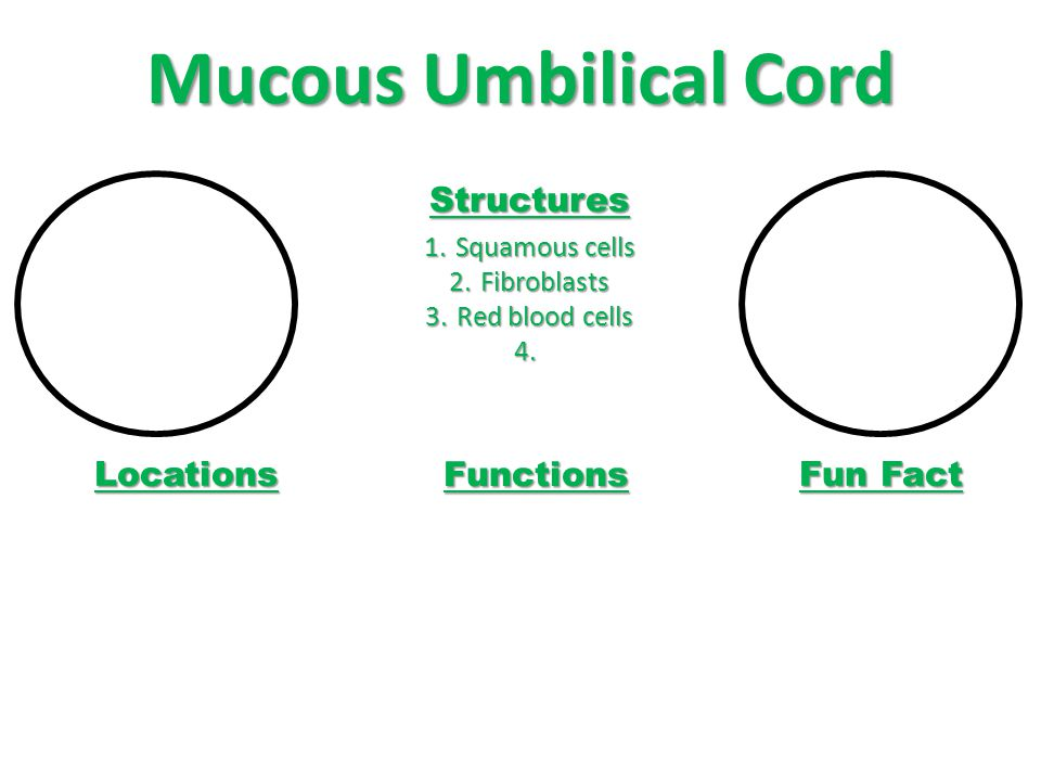 Mucous Umbilical Cord Structures 1.Squamous cells 2.Fibroblasts 3.Red blood cells 4.