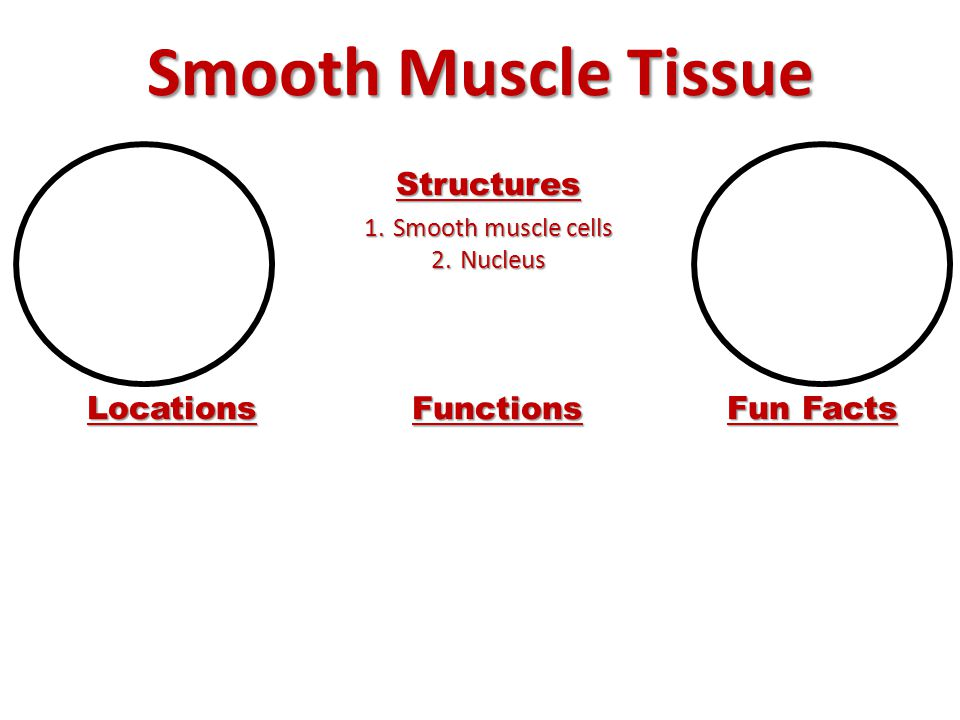 Smooth Muscle Tissue Structures 1.Smooth muscle cells 2.Nucleus Locations Functions Fun Facts
