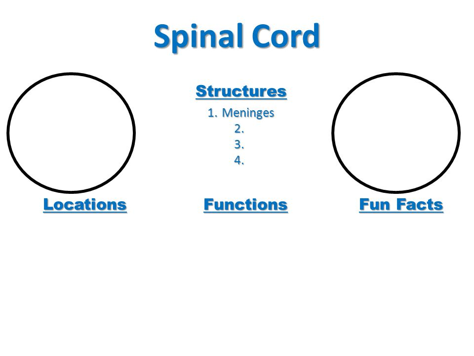 Spinal Cord Locations Functions Fun Facts Structures 1.Meninges 2. 2. 3. 3. 4. 4.