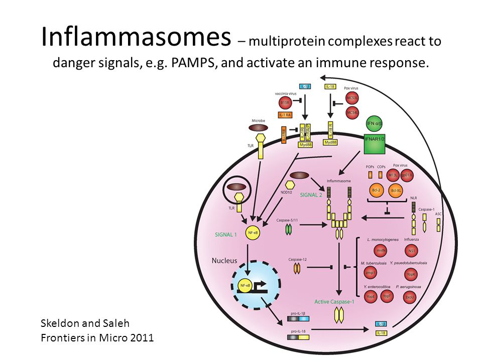 Inflammasomes – multiprotein complexes react to danger signals, e.g.